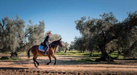 horse_galloping_pureandalusia