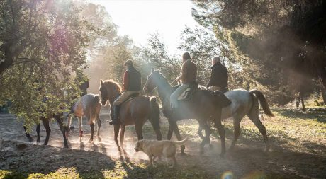 horse_riding_excursions_seville_pureandalusia