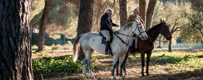 private_horse_riding_andalusia_pure_andalusia