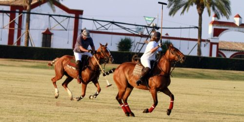POLO-CLASSES-FOR-EQUESTRIAN-LOVERS