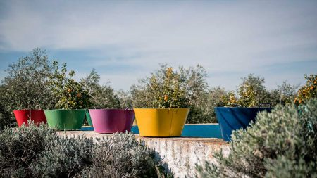 olive_oil_production_pureandalusia