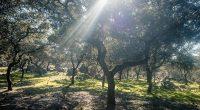 sierra_of_aracena_pureandalusia