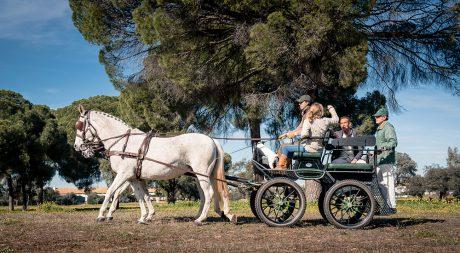 horse_tours_spain_pureandalusia
