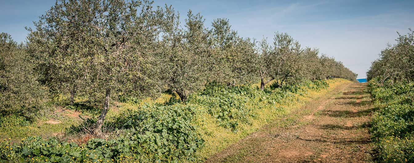 Liquid Gold, an olive oil tour in Seville | Pure Andalusia