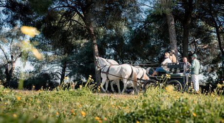 horse_carriage_doñana_park_pureandalusia