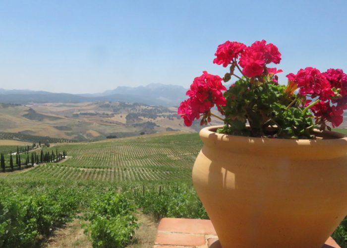 Andalusia wine tours